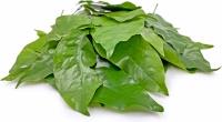 Melinjo leaf 100gr